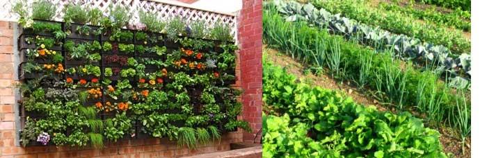 עיצוב גינת ירק - תכנון  ועיצוב גינת ירקות