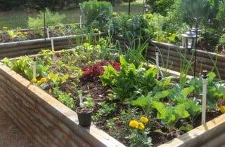 גינת ירק2 320x210 - תכנון  ועיצוב גינת ירקות
