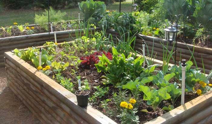 עיצוב גינת ירק2 - תכנון  ועיצוב גינת ירקות