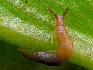 במזיקים בגינה - עצות לטיפוח גינת הנוי