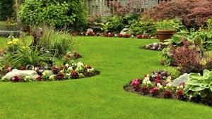 בעשבייה בגינה - עצות לטיפוח גינת הנוי