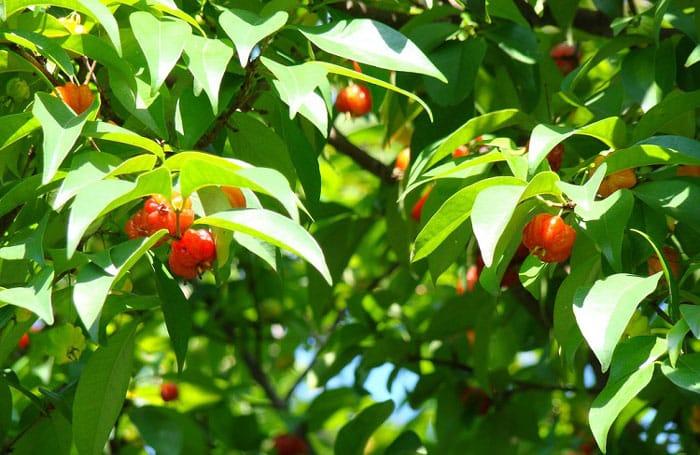 גינה עם עצי פרי 3 - עיצוב גינה - סוגי עצי פרי מומלצים