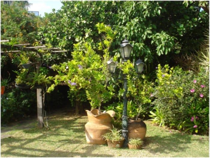 גינה עם עצי פרי - עיצוב גינה - סוגי עצי פרי מומלצים