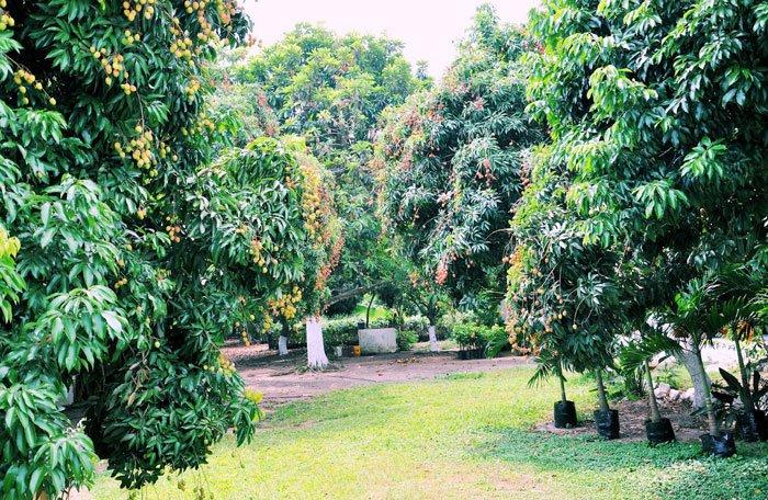 עיצוב גינה - סוגי עצי פרי מומלצים