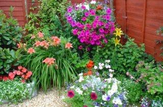 עיצוב פרחים בגינה 2 320x210 - אילו פרחים כדאי לשלב כשמעצבים גינה