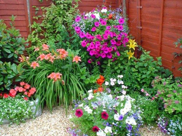 עיצוב פרחים בגינה 2 - אילו פרחים כדאי לשלב כשמעצבים גינה