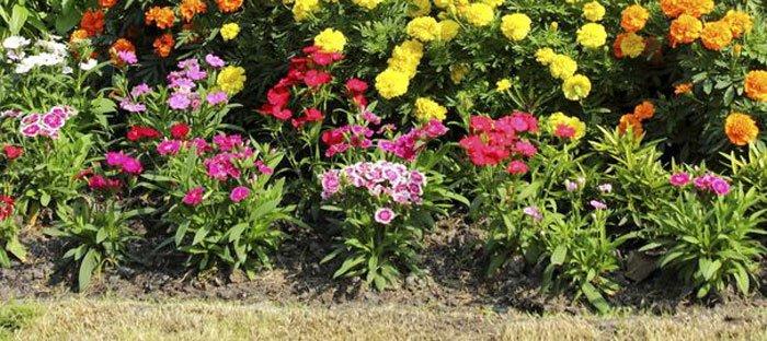עיצוב פרחים 3 - אילו פרחים כדאי לשלב כשמעצבים גינה