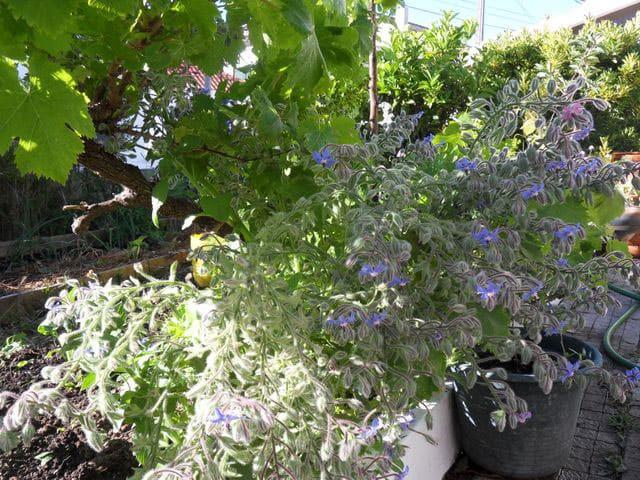 ערוגות תבינים כשילוב בעיצוב גינות - צמחי תבלין מומלצים לגינה שלכם
