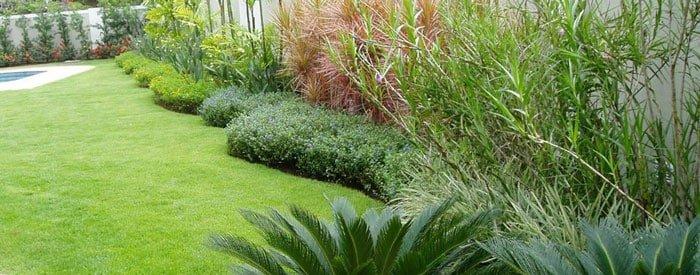 תבלינים - צמחי תבלין מומלצים לגינה שלכם