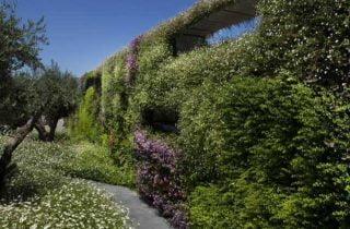 גרין וול מעודכנת 1 320x210 - קירות ירוקים טבעיים