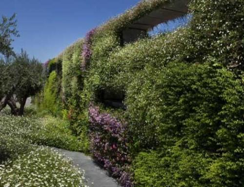 קירות ירוקים טבעיים