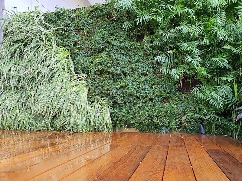 ירוקים טבעיים - קירות ירוקים טבעיים