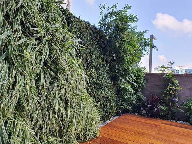 ירוקים - קירות ירוקים טבעיים