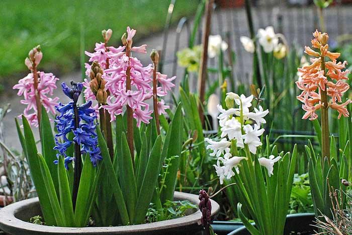 עם גיאופיטים 3 - כל מה שחשוב לדעת על שילוב גיאופיטים בגינה