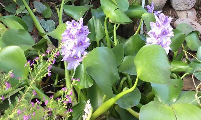 עם גיאופיטים 4 - כל מה שחשוב לדעת על שילוב גיאופיטים בגינה