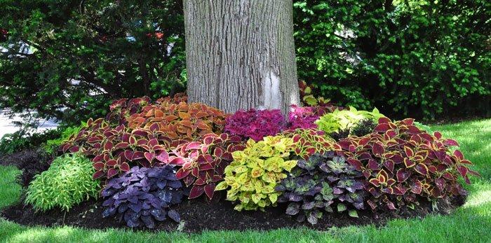צמחי עלווה בעיצוב הגינה