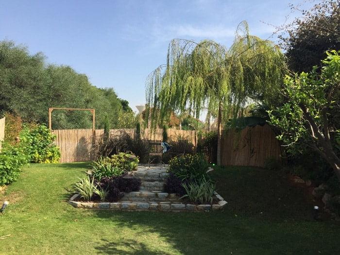 ערבה בוכייה בגינה של שיינר - עצי נוי בהקמת הגינה הפרטית