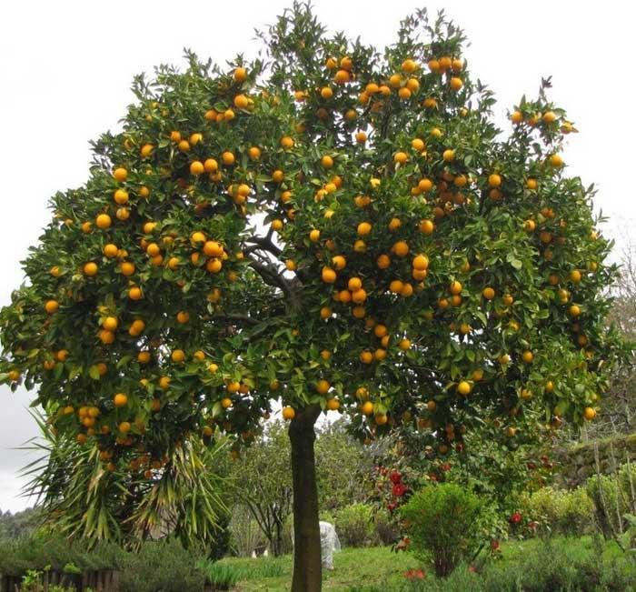 הקמת גינות עם עצי פרי