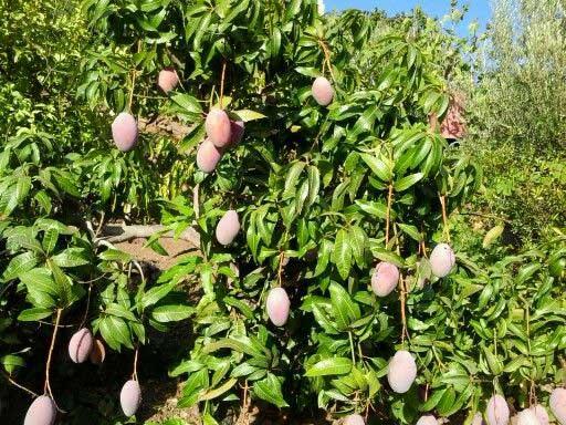 הקמת גינות עם עצי פרי - הקמת גינות עם עצי פרי