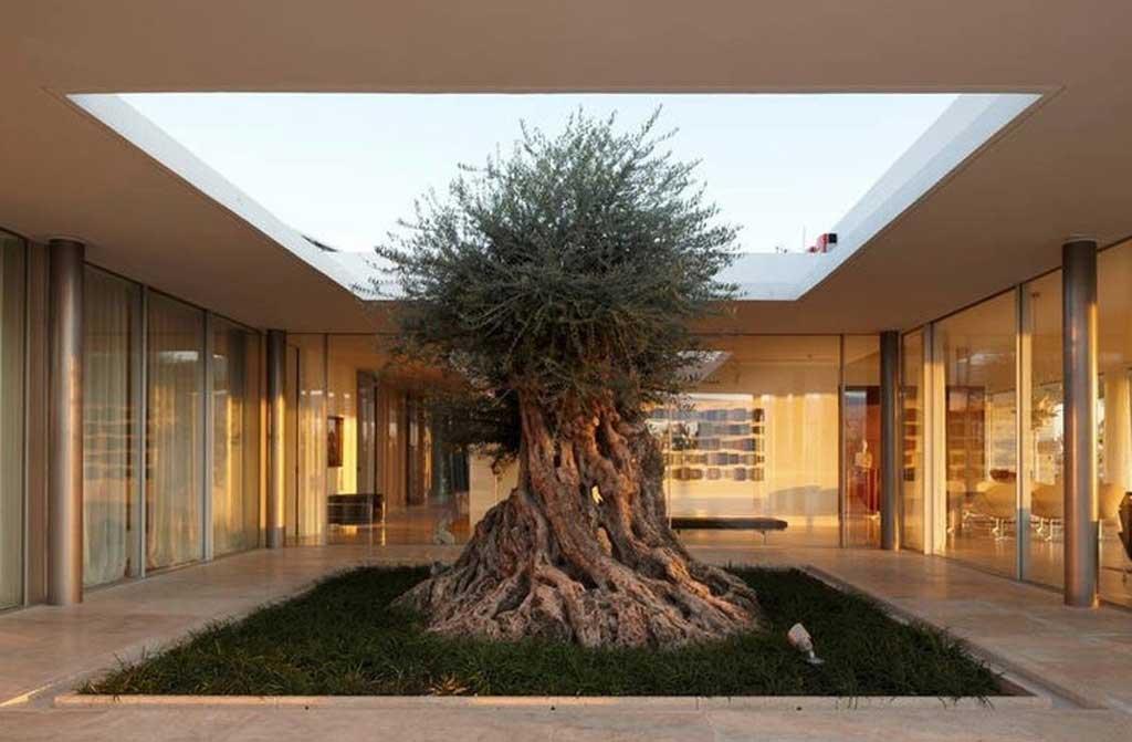 עיצוב גינה במרפסת עם עץ זית