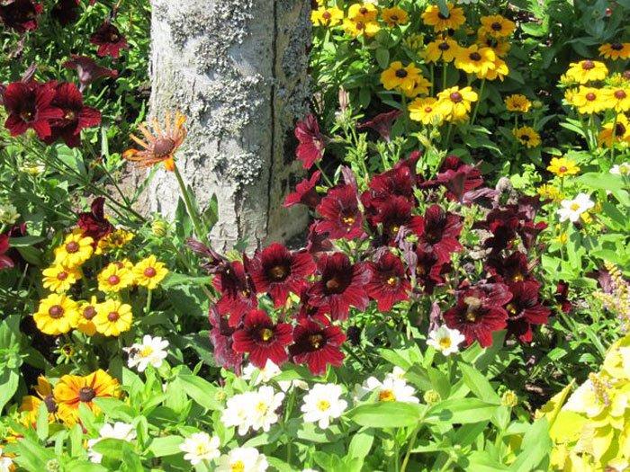 עונתיים 1 - צמחים עונתיים בגינה