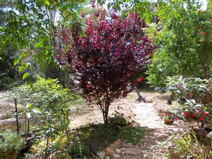 פיסארדי הקמת גינות עם עצי פרי - הקמת גינות עם עצי פרי