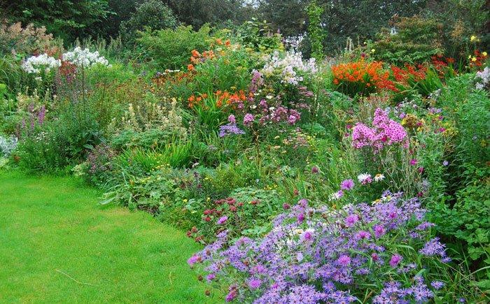 צמחים עונתיים בגינה - צמחים עונתיים בגינה