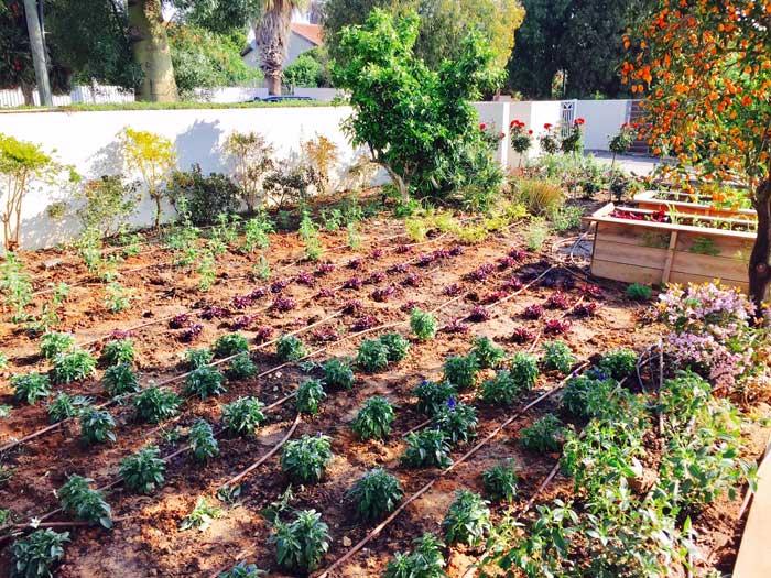 שתילת צמחייה בפרויקט הקמת גינה במושב אודים