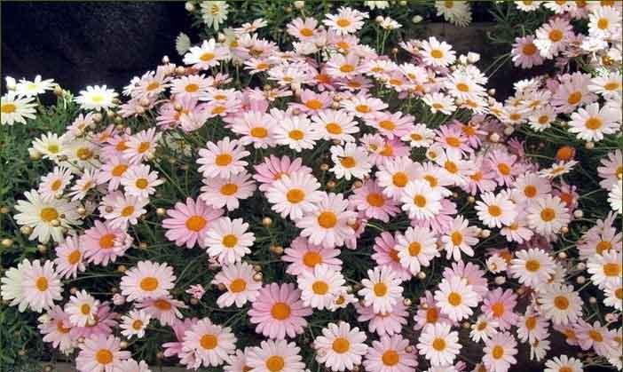 .jpg - האביב הגיע – צמחים, פרחים ומה מה שביניהם
