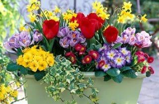 פרחים באביב
