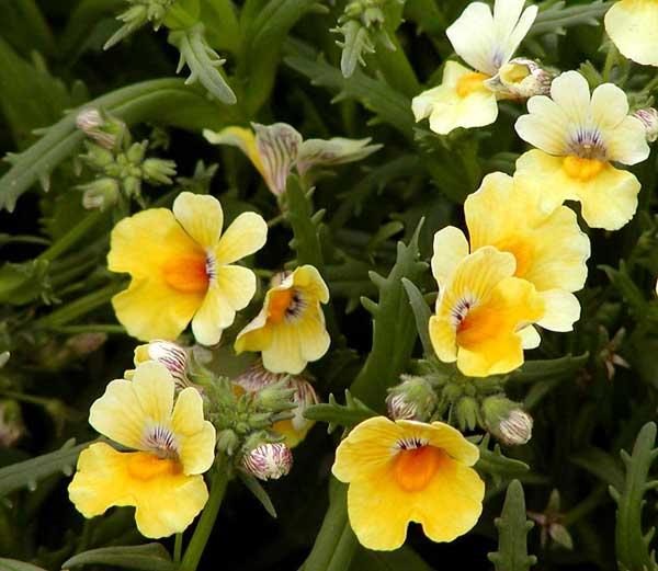 הנמסיה לעונת האביב - האביב הגיע – צמחים, פרחים ומה מה שביניהם