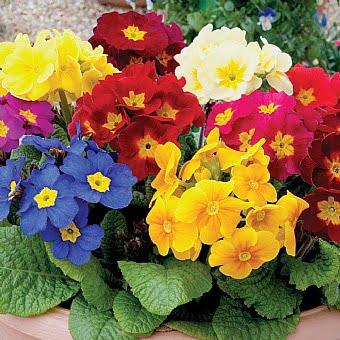 אביב 1 - האביב הגיע – צמחים, פרחים ומה מה שביניהם