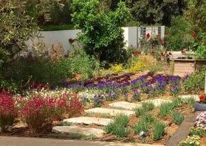 פיתוח נוף וגינה יוקרתית בפרדסיה