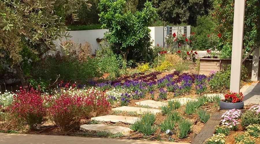 נוף והקמת גינה באודים 8.jpg 10 - פרויקטים אחרונים - עיצוב גינות אמנות הגינה הקסומה