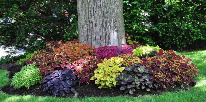 צבע דרך צמחיה - הקמת גינות בחורף – כל היתרונות