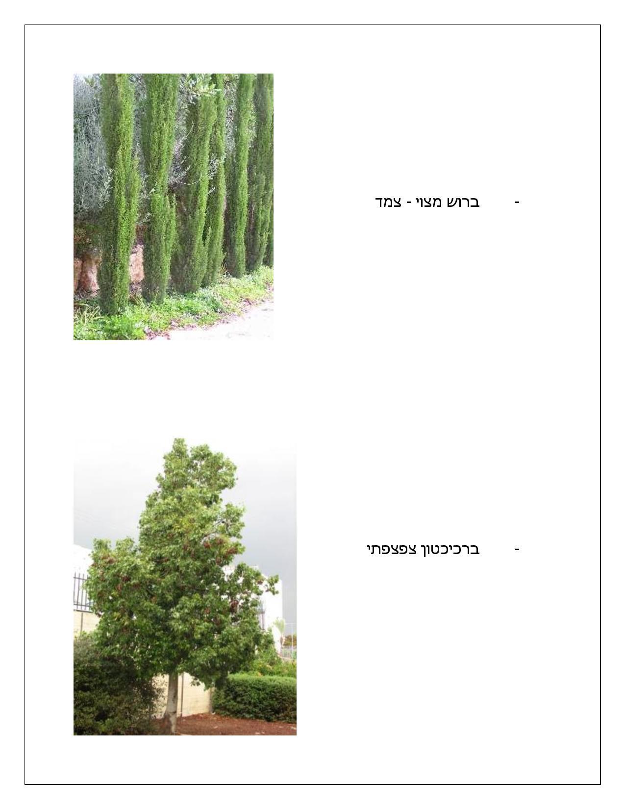 Document page 008 - דוגמא להצעת מחיר עבור עיצוב גינה