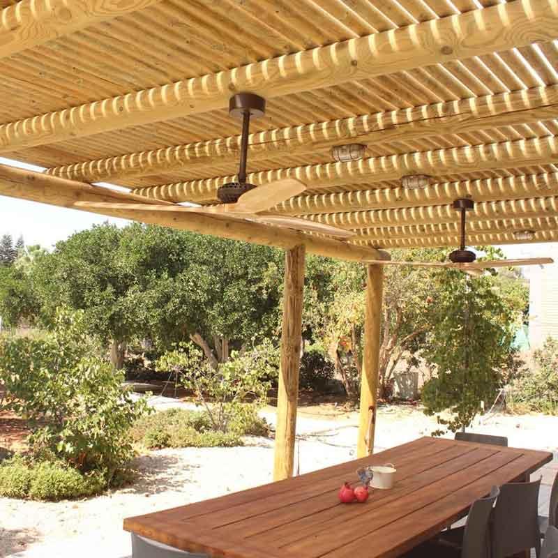 עץ לגינה 1 - בלוג עיצוב גינות