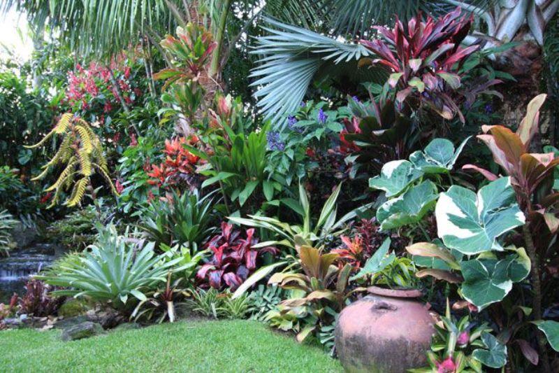 גינה טרופית 3 - לא רק מינימליסטית - הגינה הפראית