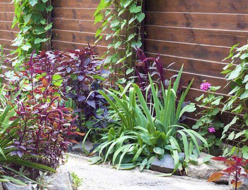 מכניסים את הפרקטיקה לגינה: הדליית פרחים מטפסים