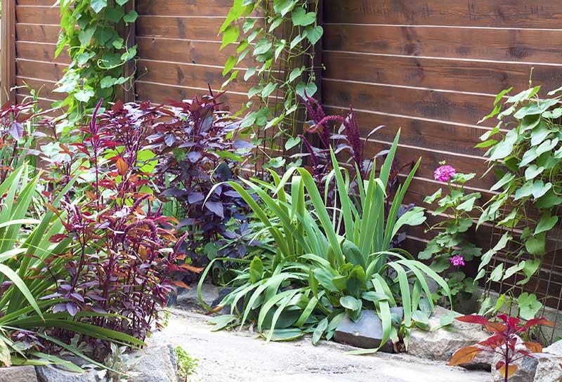 פרחים מטפסים - מכניסים את הפרקטיקה לגינה: הדליית פרחים מטפסים